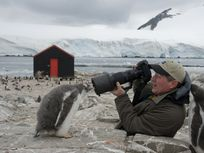 National Geographic Photographer, Joel Sartore, taking a photo of a penguin.