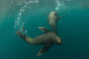 Huge Reserves Protect Underwater Mountains, Endangered Sea Life