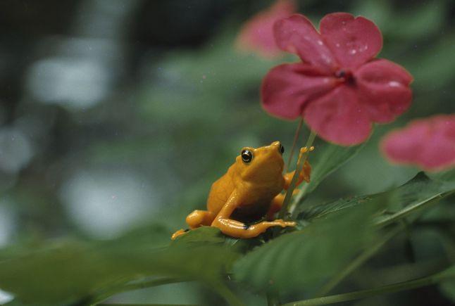 Biodiversity Frog 171970