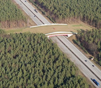 Wildlife crossing (bridge) ; Shutterstock ID 179731064; Project details: National Geographic Education Resource Library ; Job: National Geographic Education Resource Library; Client/Licensee: National Geographic Society; Other: Animal Migration Sci Unit