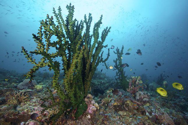 Biodiversity Coral 2628027