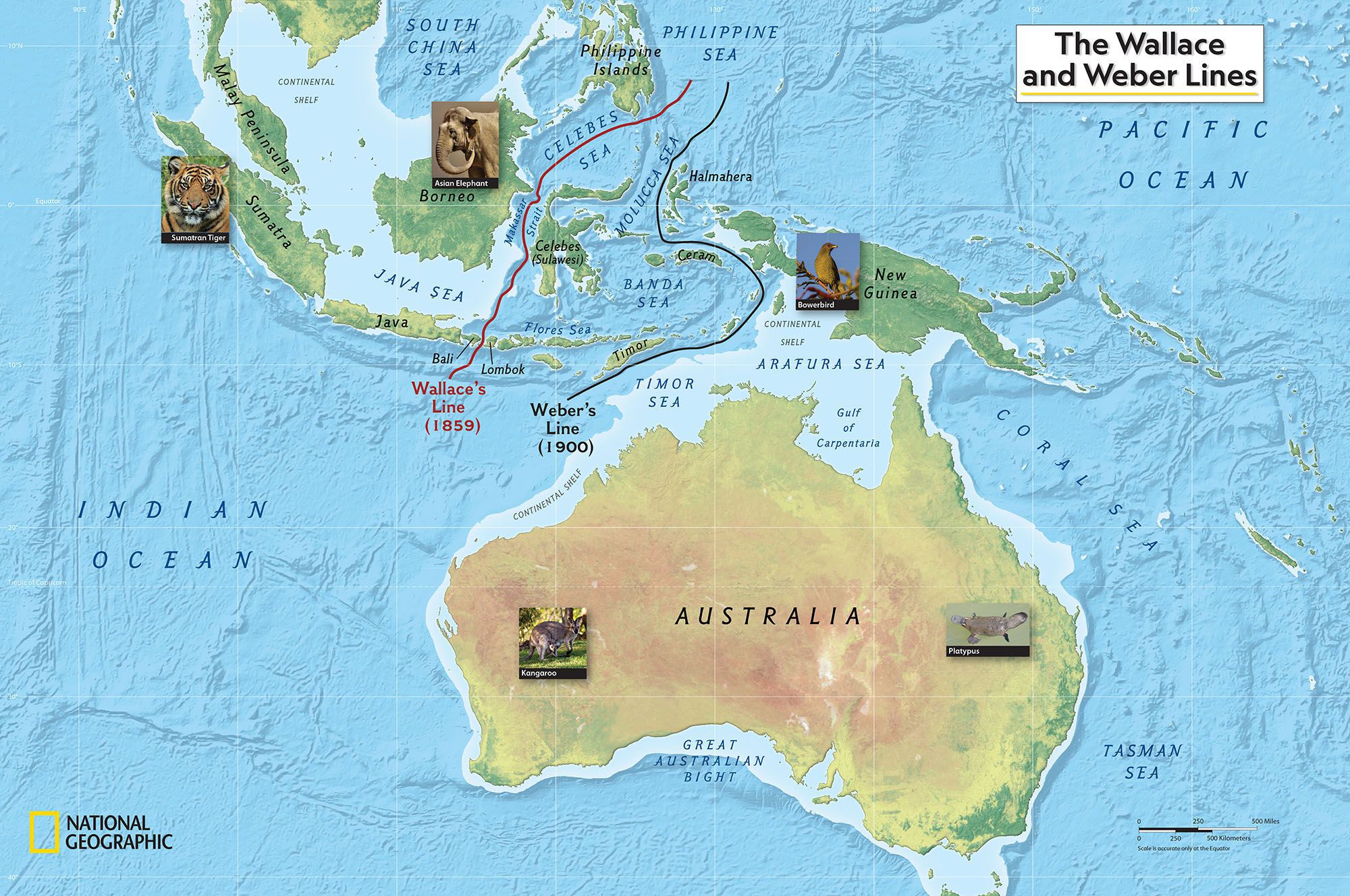 Picture of: Dividing Species Wallace Line Map National Geographic Society