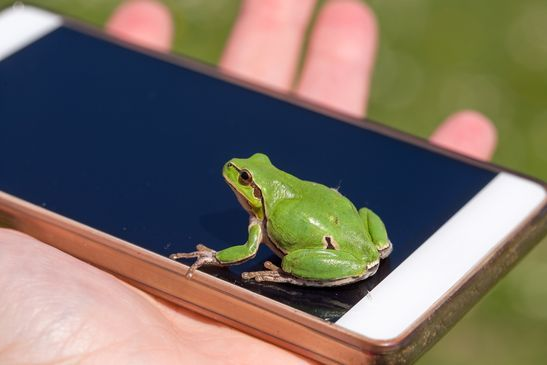small frog sitting on iPhone screen