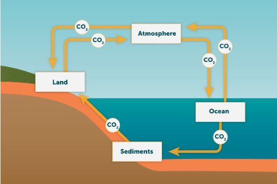 sources sinks and feedbacks national geographic society rh nationalgeographic org Carbon Sinks List by Size Carbon Sink Examples