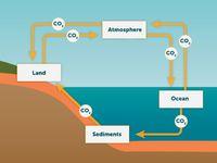 Geochemical Cycle.jpg