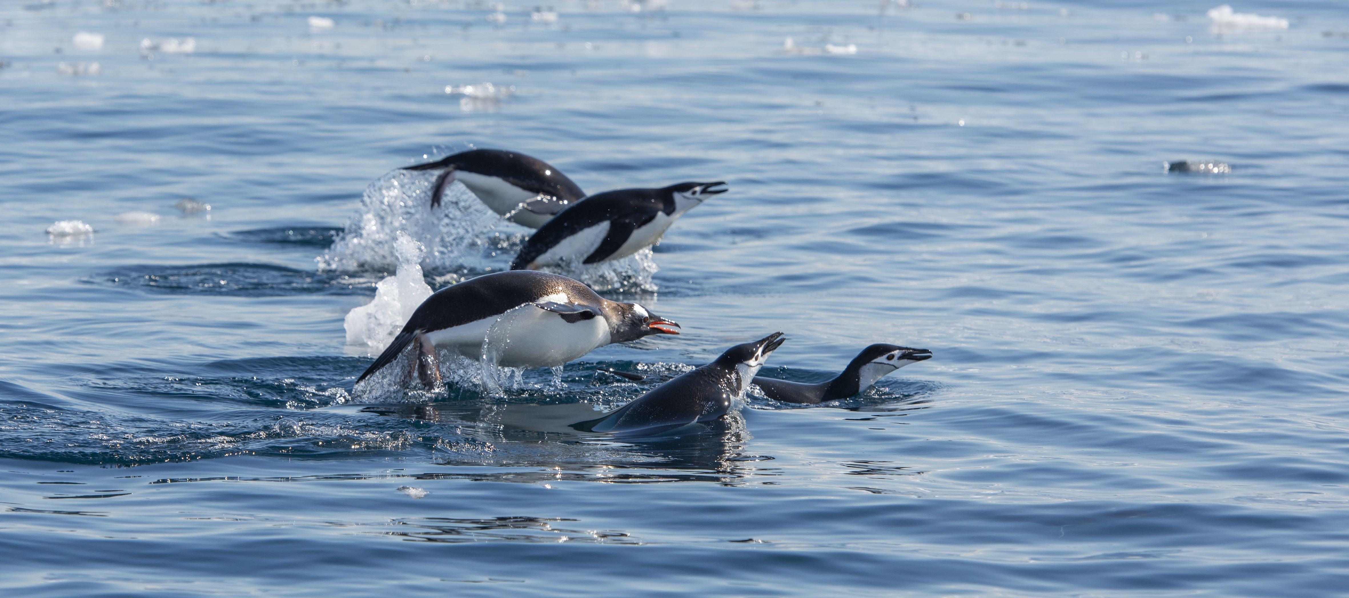 Pristine Seas | National Geographic Society