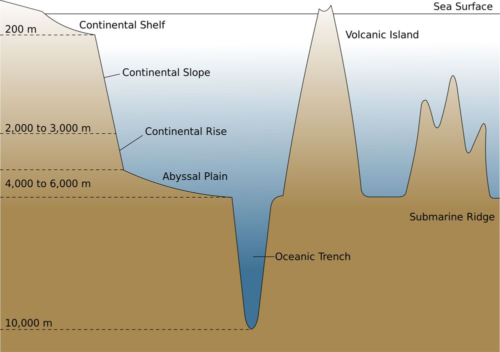 ocean trench national geographic societyOcean Topography Diagram #7