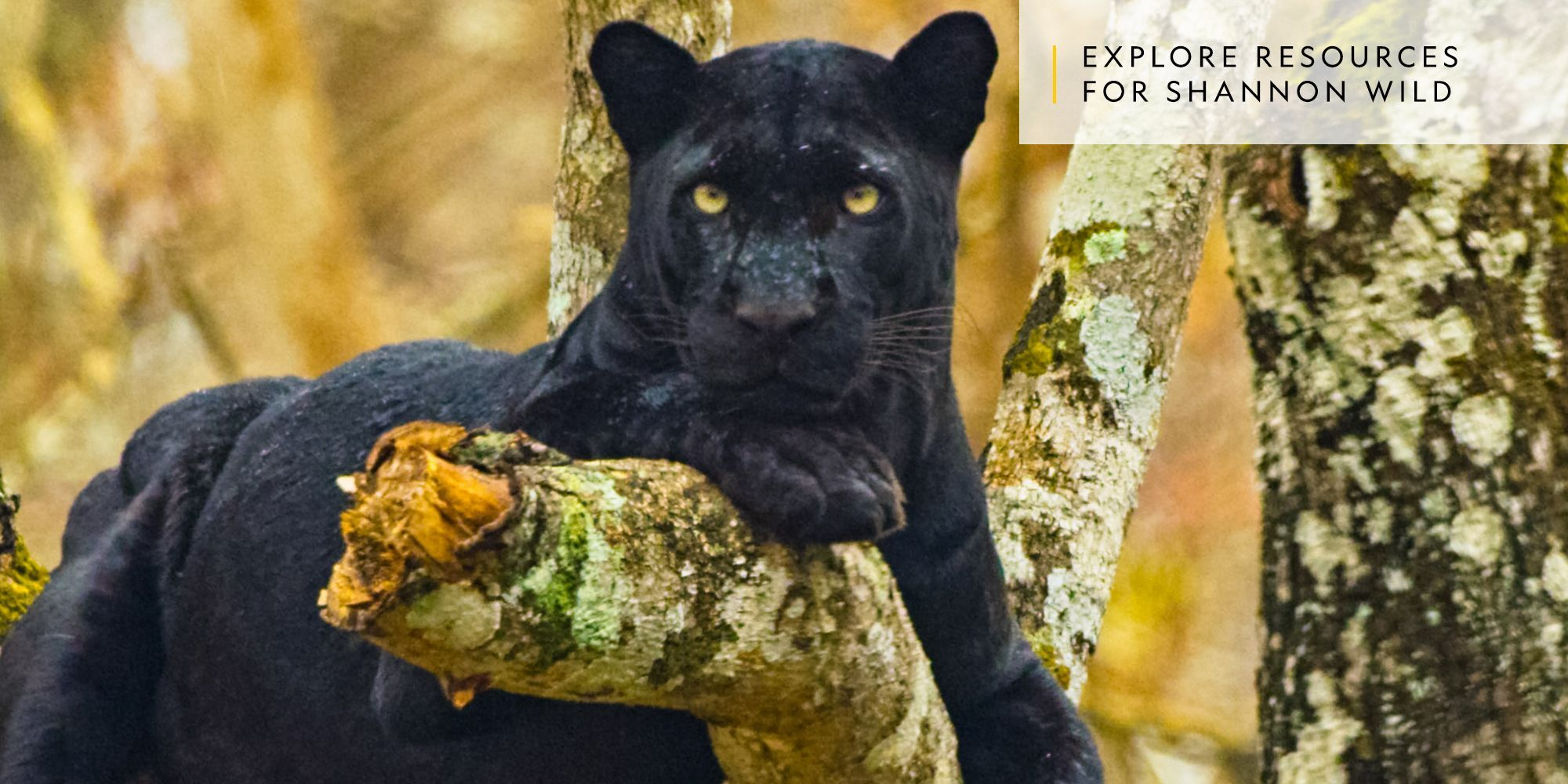 Shannon Wild | Pursuit of the Black Panther | National ...
