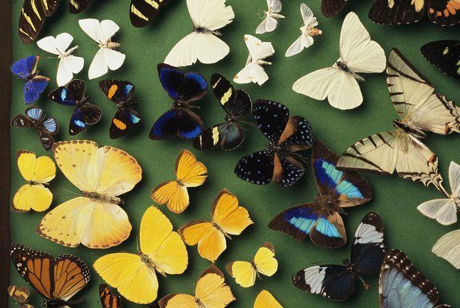 Biodiversity Butterflies 728693