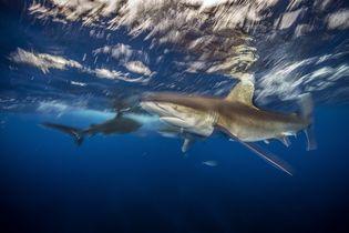 Insider Tour: Sharks