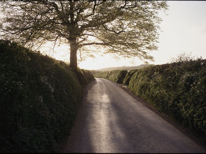 Photo of a rural road bounded by hedges and a tree.