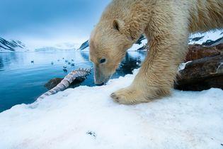 Into the Arctic Kingdom