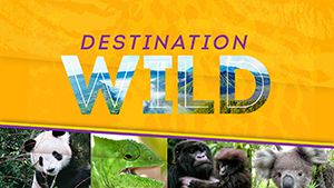 Destination Wild - to NGEd page