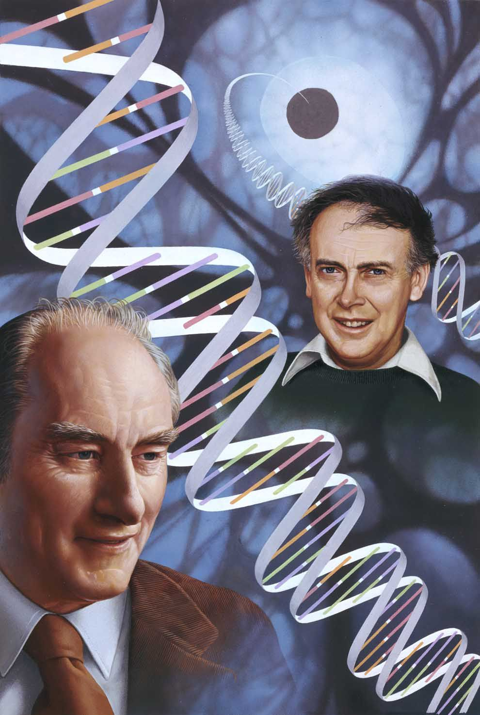 watson and crick 1-16 of 193 results for crick and watson did you mean: crock and watson the double helix: a personal account of the discovery of the structure of dna jun 12, 2001.