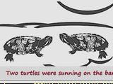 Photo: 'Nîshwi Meshihkêwaki – Two Turtles' (Sauk language), Terrie Kinsey