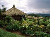 <p>Papua New Guinea huts</p>