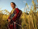 Photo: Mrs. Lalom Ramadasow in a wheat field in Palizi Village (Aka language area), Arunachal Pradesh, India