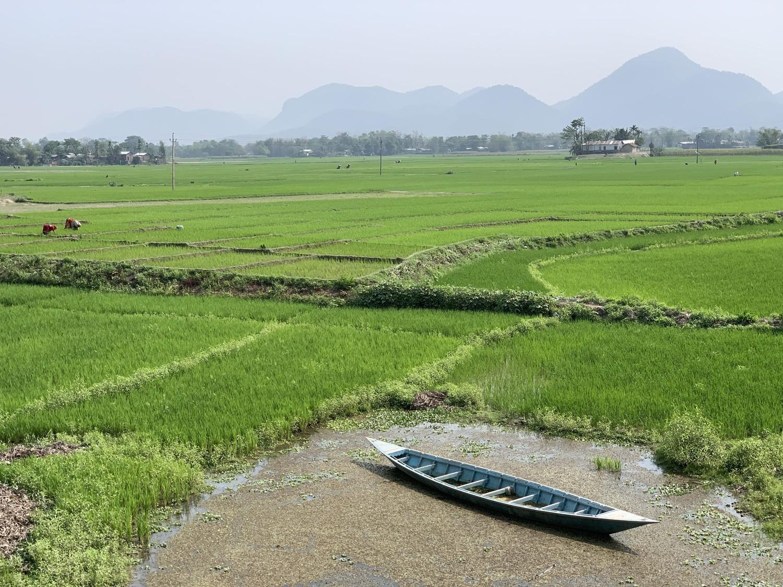 Câmpurile de orez se întind pe malurile fluviului Brahmaputra lângă Jogighopa. Foto: PAUL SALOPEK